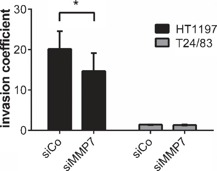 Impact of MMP7 knockdown on UCB cell invasiveness 60h after seeding the carcinoma cells. Silencing of MMP7 attenuated the invasive potential HT1197. Invasiveness of T24/83 cells was not affected. *P<0.05 t-test.