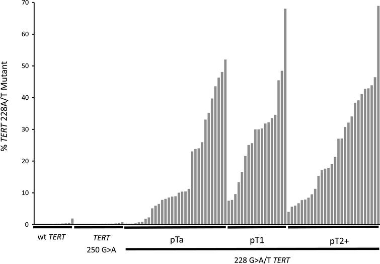 TERT 228 G>A/T mutant allele frequencies in the cfDNA of 104 UBC patients. The mutant allele frequency for each patient in the study is represented by a single bar. Patients are sorted within each group by mutant allele frequency. The groups are: UBCs with wt TERT promotor, UBCs with TERT 250 G>A mutant promotor and UBCs with TERT G > 228A/T separated into pTa, pT1 and pT2 + disease.