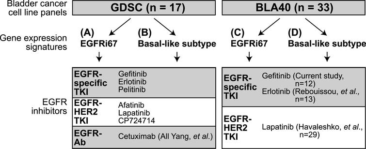 Experimental outline of the study. Two bladder cancer cell line panels were classified using gene expression signatures. The EGFRi67 was applied to the (A) GDSC and the (C) BLA40 to predict EGFR sensitivity. Two subtype gene expression signatures were used to identify basal-like bladder cancer cell lines in the (B) GDSC and (D) BLA40. Each classification was then compared to the responses of the listed EGFR inhibitors.