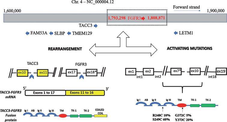 FGFR3 gene alterations.
