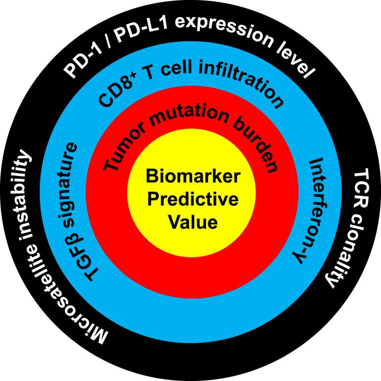 Ranking of the predictive value of molecular biomarkers for response to PD-1/PD-L1 immune checkpoint blockade. Biomarkers closer to the center are more predictive of response. High predictive value: tumor mutation burden. Moderate predictive value: TGFβ signature, CD8 T cell infiltration, interferon-γ. Low predictive value: microsatellite instability, PD-1/PD-L1 expression level, TCR clonality. Predictive level was assessed based on the amount of published data and the quality of these studies, as evaluated and determined in consensus by all authors.