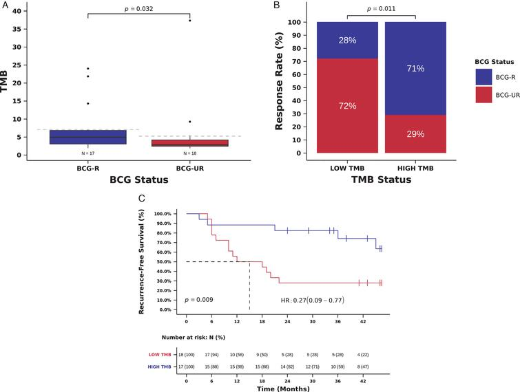 TMB and benefit from BCG immunotherapy. (A) TMB in tumors from patients responsive (BCG-R) and unresponsive (BCG-UR) to BCG immunotherapy (TMB BCG-R=4.9 vs. BCG-UR=2.8, mutations/Mb, Mann-Whitney P=0.032) (B) BCG response rate in patients harboring tumors with high TMB (HIGH-TMB) compared to tumors with low TMB (LOW-TMB) (RR HIGH-TMB=71% vs. LOW-TMB=28%, Odds Ratio (OR)=6.24, 95% CI: 1.44-27.06, Pearson Chi-Square P=0.011) (C) Kaplan-Meier curve for recurrence-free survival after BCG immunotherapy for patients harboring tumors with HIGH-TMB compared to tumors with LOW-TMB. (RFS HIGH-TMB=38 vs. LOW-TMB=15 months, Hazard Ratio (HR)=0.27, 95% CI: 0.10- 0.77, Log-rank P=0.009).
