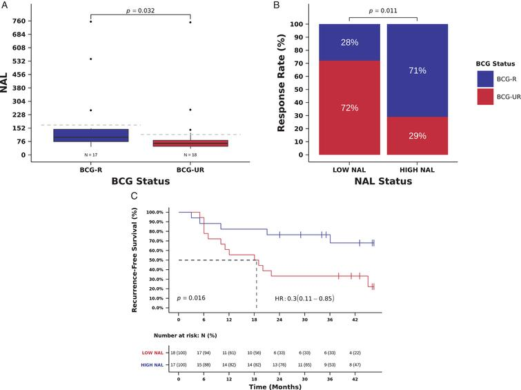 NAL and benefit from BCG immunotherapy. (A) NAL in tumors from patients responsive (BCG-R) and unresponsive (BCG-UR) to BCG immunotherapy (NAL BCG-R=100.0 vs. BCG-UR=65, mutations/Mb, Mann-Whitney P=0.032) (B) BCG response rate in patients harboring tumors with high NAL (HIGH-NAL) compared to tumors with low NAL (LOW-NAL) (RR HIGH-NAL=71% vs. LOW-NAL=28%, Odds Ratio (OR)=6.24, 95% CI: 1.44-27.06, Pearson Chi-Square P=0.011) (C) Kaplan-Meier curve for recurrence-free survival after BCG immunotherapy for patients harboring tumors with HIGH-NAL compared to tumors with LOW-NAL. (RFS HIGH-NAL=36 vs. LOW-NAL=18.5 months, Hazard Ratio (HR)=0.30, 95% CI: 0.11- 0.85, Log-rank P=0.017).