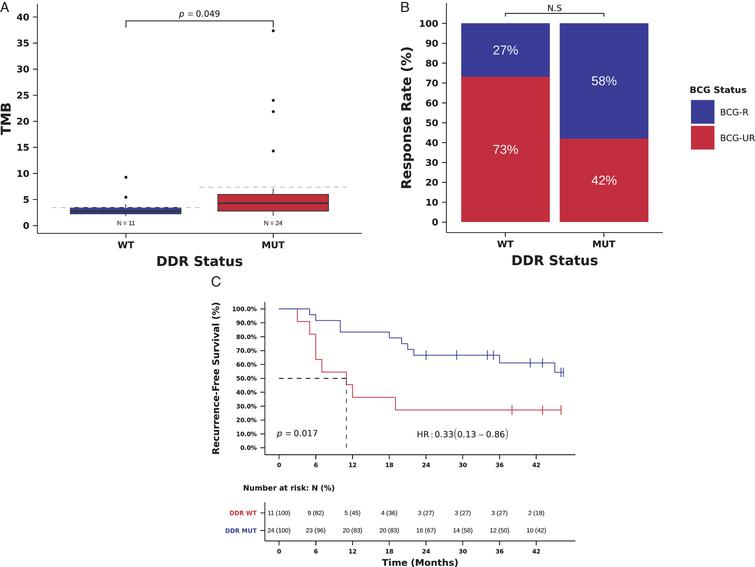 Mutations in DDR genes (193 gene list) and benefit from BCG immunotherapy. (A) TMB in tumors with deleterious mutations in DDR genes (DDR-MUT) compared to tumors with wild-type DDR genes (DDR-WT). (TMB DDR-MUT=4.3 vs. DDR-WT=2.7 mutations/Mb, Mann-Whitney P=0.049). (B) BCG response rate in patients harboring tumors with deleterious mutations in DDR genes (DDR-MUT) compared to tumors with wild-type DDR genes (DDR-WT). (RR DDR-MUT=58% vs. DDR-WT=27%, OR=3.73, 95%, CI: 0.79-17.68, Pearson Chi-Square P=0.088) (C) Kaplan-Meier curve for recurrence-free survival after BCG immunotherapy for patients harboring tumors with deleterious mutations in DDR genes (DDR-MUT) compared to tumors with wild-type DDR genes (DDR-WT). (RFS DDR-MUT=35.5 vs. DDR-WT=11.0 months, HR=0.33, 95% CI: 0.13-0.86, Log-rank P=0.017).