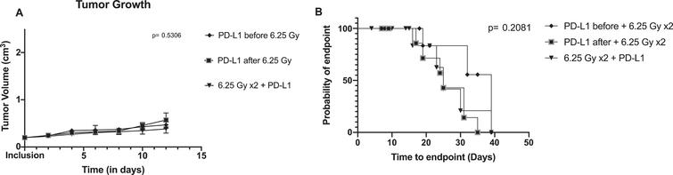 Tumor growth and survival between combination arms: concurrent anti-PD-L1 and XRT (radiotherapy), neoadjuvant anti-PD-L1 with XRT and adjuvant anti-PD-L1 with XRT. A/ Tumor growth is shown using mean and standard errors for each group at each time points. Analysis of variance revealed no significant differences between arms (p=0.5306). B/ Kaplan-Meier plot representing the probability of endpoint-free survival in each group. Log rank test is not significant (p=0.2081).