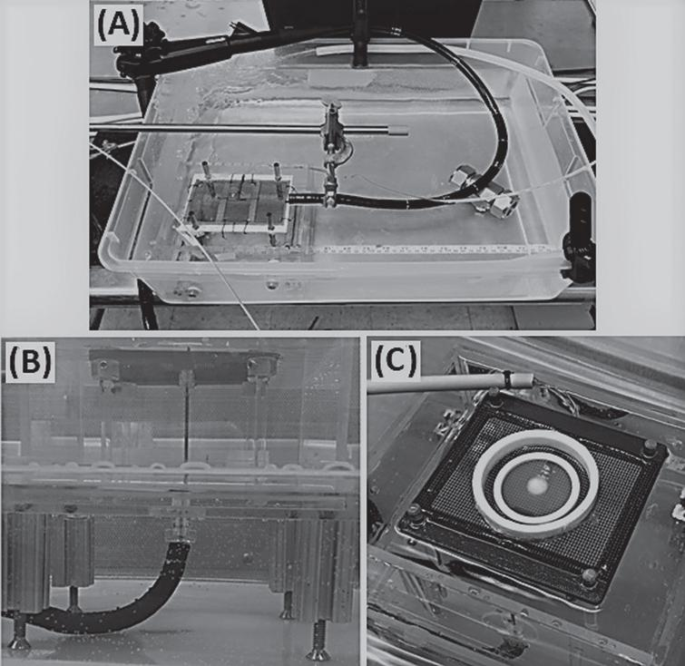 Images of the In Vitro TEM Freeze Experimental Setup. The test set up consisted of an endoscope and an acrylic box containing the TEM platform submerged in a 37°C water bath (A). The cryocatheter was inserted through the scope and the distal end was passed through a sealable gasket on the bottom of the TEM box and placed perpendicular to a mesh platform holding the TEM (B). The SCaBER and UMUC3-TEMs were then placed on the mesh platform, centered over the cryocatheter, and the acrylic box was filled with 37°C Milli-Q grade water to a level even with the TEM ring/probe interface (C).
