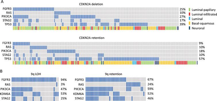 Oncoplots showing distribution of common mutations according to chromosome 9 status. A. Oncoplot for selected genes in muscle-invasive bladder tumours with and without deletion of the CDKN2A locus. Data from [30]. B. Oncoplot for selected genes in stage Ta tumors with and without 9q loss. Data from [165].
