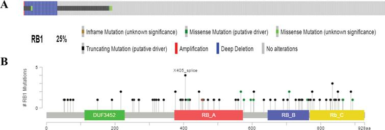 Mutation frequency and types of RB1 in bladder cancer from the cancer Genome Atlas (TCGA) database. A. Mutation frequency of RB1 in bladder cancer. B. Mutation types of RB1 in bladder cancer.