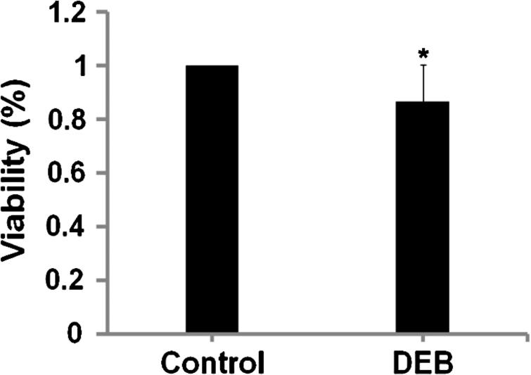 WST-1 assay indicates human umbilical vein endothelial cell (HUVEC) viability after co-incubation with iopromide-coated balloon or bare balloon up to 48h. Data are expressed as means ± SD of six independent experiments (ratio on control1). ∗P<0.05 vs. control group.