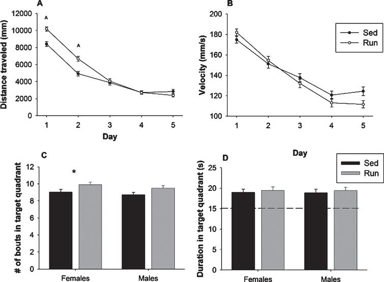 MWM performance. (A) Acquisition of the MWM task in path length (mm) in sedentary and runners, as the average path length of two trials per day. There exists a counterintuitive effect of exercise in acquisition, as sedentary mice outperformed runners in path length to platform on Day 1 and Day 2. (B) Average velocity (mm/s) across two trials per day of both runners and sedentary animals. (C-D) Probe trial data for the MWM, represented as number of bouts (C) and duration (D) in the target quadrant indicates that although runners crossed into the target quadrant significantly more than did sedentary animals, all animals appeared to learn the task as each group spent over 15 seconds in the target quadrant. ∧p <  0.01,*p <  0.05. Values indicate means±SEM.