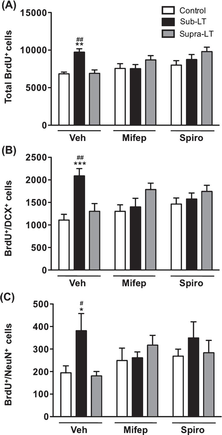 Effects of glucocorticoid receptor antagonists on exercise-induced adult hippocampal neurogenesis The role of glucocorticoid signaling was evaluated with the injection of the mineralocorticoid receptor (MR) antagonist spironolactone, and the glucocorticoid receptor (GR) antagonist mifepristone. (A) Total number of BrdU+ cells. There was a significant main effect of treadmill exercise (F (2,49)  = 4.15, p <  0.05), but not glucocorticoid receptor antagonist (F (2,49)  = 3.07, p = 0.06), and a significant glucocorticoid receptor antagonist×treadmill exercise interaction (F (4,49)  = 4.7, p <  0.01). (B) Number of BrdU+/DCX+ cells. There was a significant main effect of treadmill exercise (F (2,49)  = 5.59, p <  0.01), but not glucocorticoid receptor antagonist (F (2,49)  = 3.72, p = 0.69), and a significant glucocorticoid receptor antagonist×treadmill exercise interaction (F (4,49)  = 4.86, p <  0.01). (C) Number of BrdU+/NeuN+ cells in the dentate gyrus. There was a significant main effect of treadmill exercise (F (2,47)  = 3.23, p <  0.05), but not glucocorticoid receptor antagonist (F (2,47)  = 0.61, p = 0.55), and no significant glucocorticoid receptor antagonist×treadmill exercise interaction (F (4,47)  = 1.87, p = 0.14). Data represent the mean ± SEM (n = 6 -7 mice). *, p <  0.05, **, p <  0.01, ***, p <  0.001 in comparison with respective control mice and #, p <  0.05, ##, p <  0.01 in comparison with supra-LT (two-way ANOVA and Bonferroni post hoc tests).