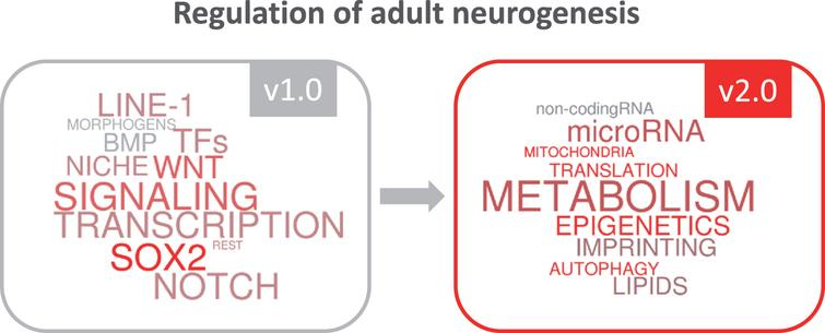 The growing insight into regulatory mechanisms in adult neurogenesis.