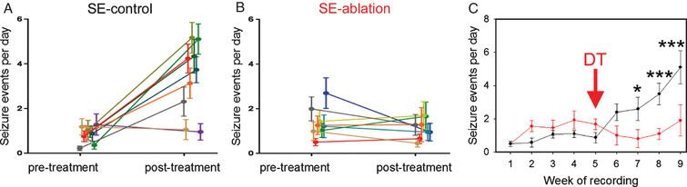 Cell ablation treatment blocks epilepsy progression. Nestin-CreERT2, DTrfl/fl mice were generated to induce expression of the diphtheria toxin receptor among newborn granule cells. Epilepsy was induced using the pilocarpine status epilepticus model. Following one month of 24/7 video-EEG monitoring, animals were treated with saline (SE-control) or diphtheria toxin (SE-ablation). Pre-treatment and post-treatment seizure frequencies (A,B) are shown for SE-control mice (left, black) and SE-ablation mice (middle, red). Each line shows the means±SEM for one animal. (C) Average number of seizure events during each week of recording for SE-control (black) and SE-ablation (red) groups (DT was given during week 5, red arrow). Ablation treatment prevented the dramatic increase in seizure frequency evident in SE-control animals. *p<0.05, ***p<0.001.