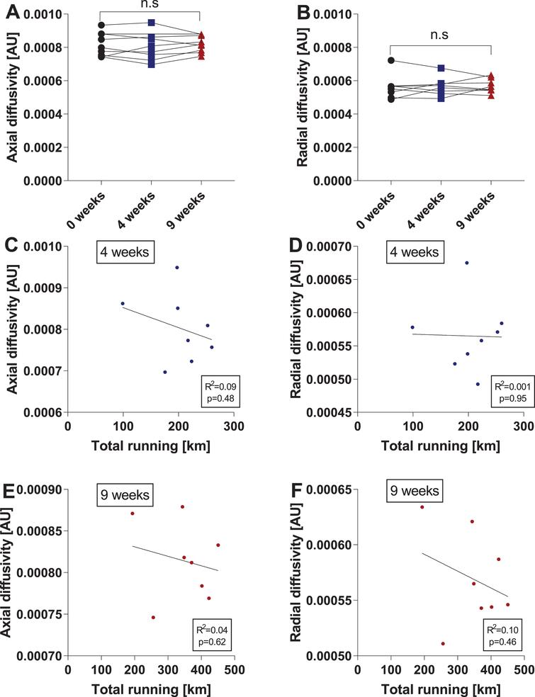 Voluntary running does not affect axial diffusivity or radial diffusivity in the hippocampus. Changes in hippocampal axial diffusivity (AD) (A) and radial diffusivity (RD) (B) after four and nine weeks of running. Data are depicted as arbitrary units (AU) and are expressed as mean ± SEM. n.s. = not significant using repeated-measures one-way ANOVA. Correlations of hippocampal AD (C) and RD (D) with the total amount of running at four weeks were calculated using the two-tailed Pearson correlation test. An individual dot represents one mouse. Data are expressed as mean ± SEM. Correlations of hippocampal AD (E) and RD (F) with the total amount of running at nine weeks were calculated using the two-tailed Pearson correlation test. An individual dot represents one mouse. Data are expressed as mean ± SEM.