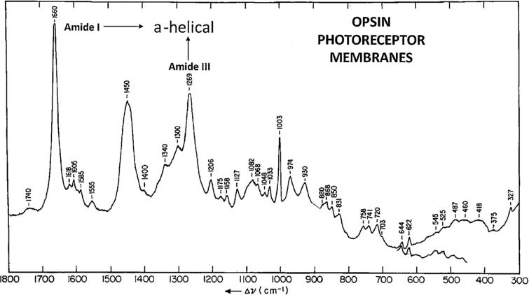 Raman spectrum of calf opsin photoreceptor membrane (adapted from Ref. [193]).