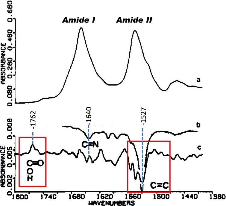 FTIR difference spectrum of BR → M transition of dried purple membrane (PM) containing bacteriorhodopsin (BR) reported in 1981. (a) Absolute infrared absorbance of PM film deposited on AgCl using ISD, (b) RRS of PM suspension using 5145 Å excitation with positive intensity of bands reversed. (c) FTIR-differences calculated as difference between spectrum recorded immediately after illumination for one minute from one recorded immediately before flash excitation. Note largest band in the difference spectrum near 1527 cm−1 (inside red box) arises from the ethylenic C=C stretch and reflects isomerization of the retinal chromophore. The positive band at 1762 cm−1 (inside red box) was assigned to protonation of an Asp or Glu residue containing a carboxylate group which becomes protonated during formation of the M412 intermediate. A negative band at 1640 cm−1 is assigned to the Schiff Base C=N stretching mode (adapted from Ref. [213]).