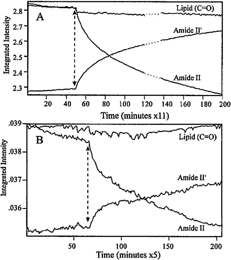 Comparison of kinetics H–D exchange in bovine rhodopsin disc membrane after photo bleaching (indicated by dashed arrow) measured by transmittance (top) and ATR-FTIR (bottom) (see Ref. [183] for additional details).