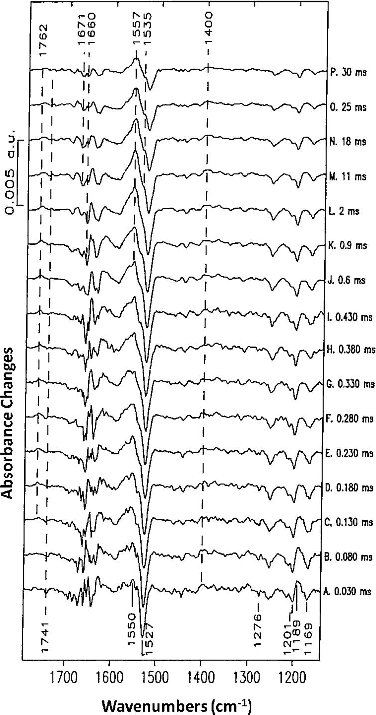 Stroboscopic time-resolved FTIR difference spectra of the BR photocycle. (Adapted from [41]; see reference for further details.)