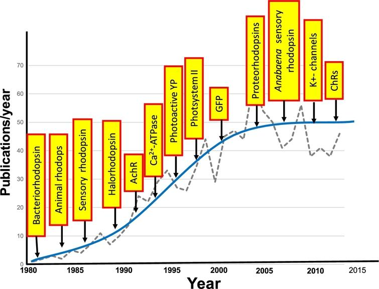 Growth in application of FTIR difference spectroscopy to study membrane proteins and other photoactive proteins or proteins that can be photoactivated. Graph shows the approximate number of publications/year. Yellow boxes indicate the approximate time that FTIR difference spectroscopy was first applied for the particular protein.
