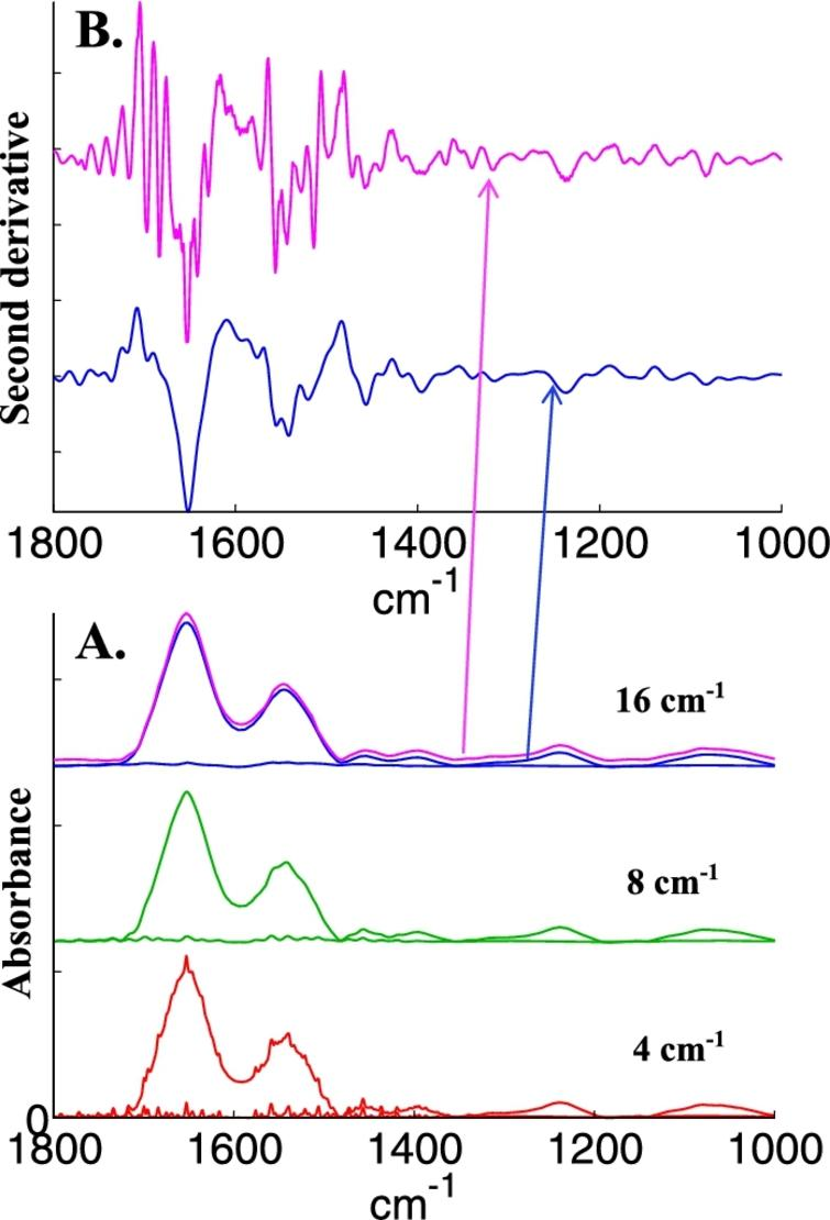 Illustration of water vapor contribution as a function of spectral resolution. A, bottom line, spectrum of water vapor recorded at a nominal resolution of 4cm−1 and of breast epithelial cells to which this water vapor spectrum has been added (bottom, red spectra); after decreasing resolution by apodization of the interferogram by a Gaussian lineshape to 8 cm−1 (middle, green spectra) and to 16cm−1 (top, magenta spectra). The original cell spectrum appears in blue with a small offset for the sake of clarity. B, second derivative (Savitzky–Golay, 9 points, spectra encoded every 1cm−1) of the original cell spectrum (blue) and of the spectrum containing water vapor contribution whose resolution was decreased at 16 cm−1 (magenta). The arrows indicate the correspondence between each spectrum and its second derivative.
