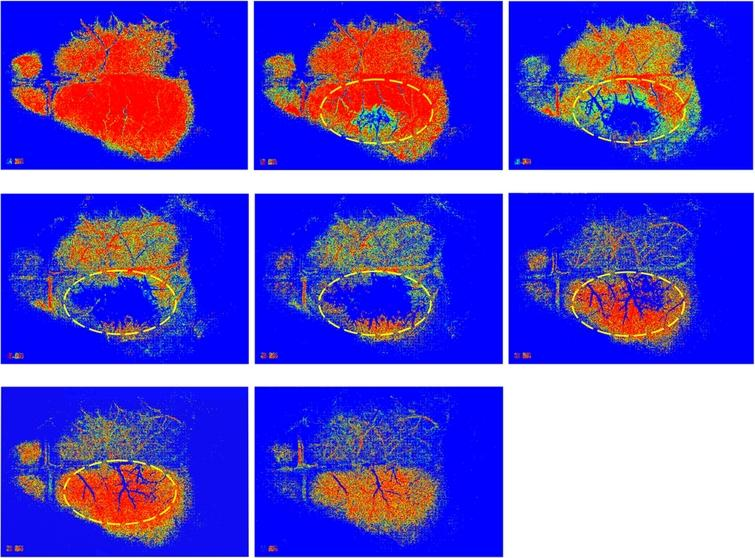 The MHIs showing clearly the areas with low perfusion in the right hemisphere of a mouse brain during induced occlusion of the middle cerebral artery (MCA). Each MHI was generated from a stack of DF images around a particular time point given in Fig. 2. For the computation of each MHI, a buffer of 8 images with a threshold value of 14 was used.