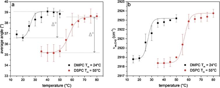 Changes upon lipid phase transition of DMPC and DSPC. Investigation of (a)the orientation of the lipid alkyl chain and (b)the frequency position of the band corresponding to the asymmetric stretching vibration of the CH2-groups (νas,CH2) in the lipid alkyl chain for DMPC (black squares) and DSPC (red circles) respectively. The data were fitted to determine the phase transition temperature and the difference in the average angle for both phases (Δ°).