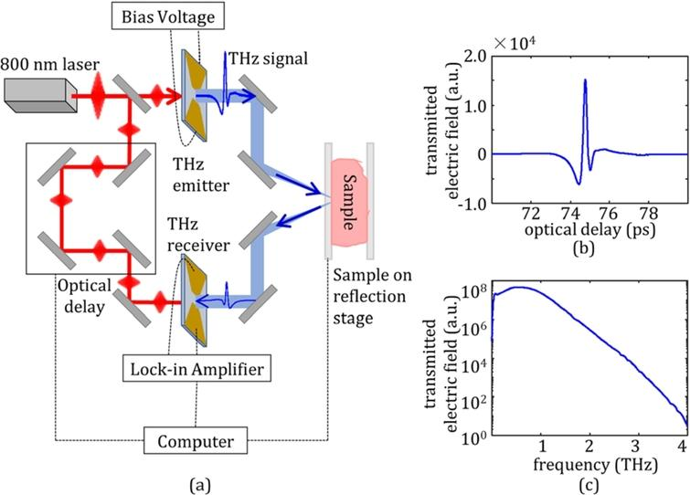 (a)Terahertz imaging system diagram for the reflection mode of fresh tumors. (b)Incident time domain THz pulse, and (c)frequency domain signal following Fourier transform [21].