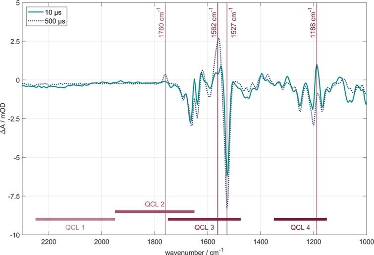 Time-resolved FTIR difference spectra of BR in purple membrane at 10 μs (grey line) and 500 μs (dashed line) after photoexcitation. Marked by vertical lines are the four probe wavenumbers for the QCL measurements. Corresponding transients are shown in Fig.3. The spectral ranges of the four QCL-heads are displayed by horizontal lines.