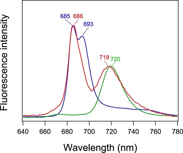 Fluorescence spectrum of PSI-GNP-PSII conjugates (red line) in comparison with the spectra of free PSI (green line) and PSII (blue line) complexes measured at 77 K. The spectra of free PSI and PSII were normalized to the spectrum of PSI-GNP-PSII at the corresponding maximum peaks.