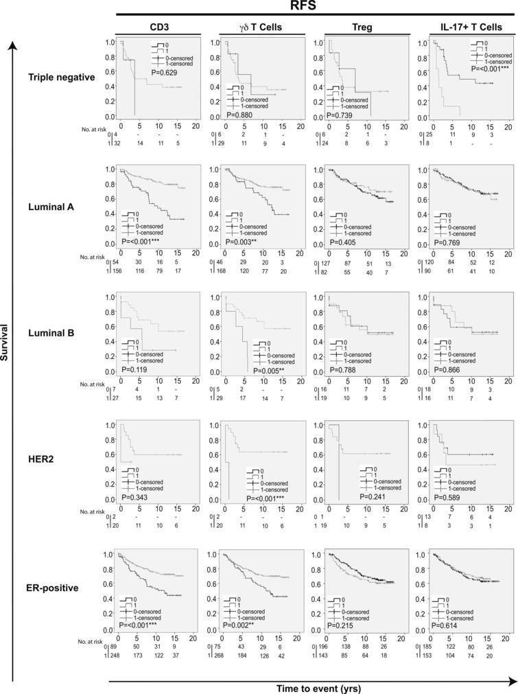 Kaplan-Meier estimates of recurrence free survival according to different infiltrating T cell subpopulations in breast cancer. Impact of pan-T cell CD3, γ⁢δ T cells, Tregs and IL-17+ T cells on RFS in different breast cancer subtypes. Log-rank Pvalue < 0.05 was considered significant.
