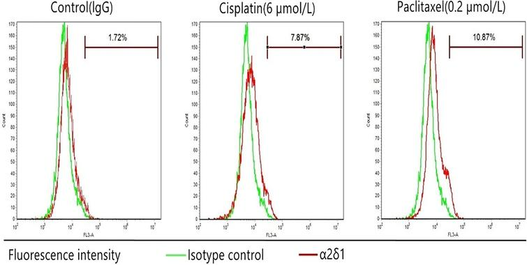 Chemoresistance ofTU686 cells. The percentage of sorted α2δ1+ TU686 cells after exposure to cisplatin (6μmol/L) or paclitaxel (0.2μmol/L) for 72 hours.