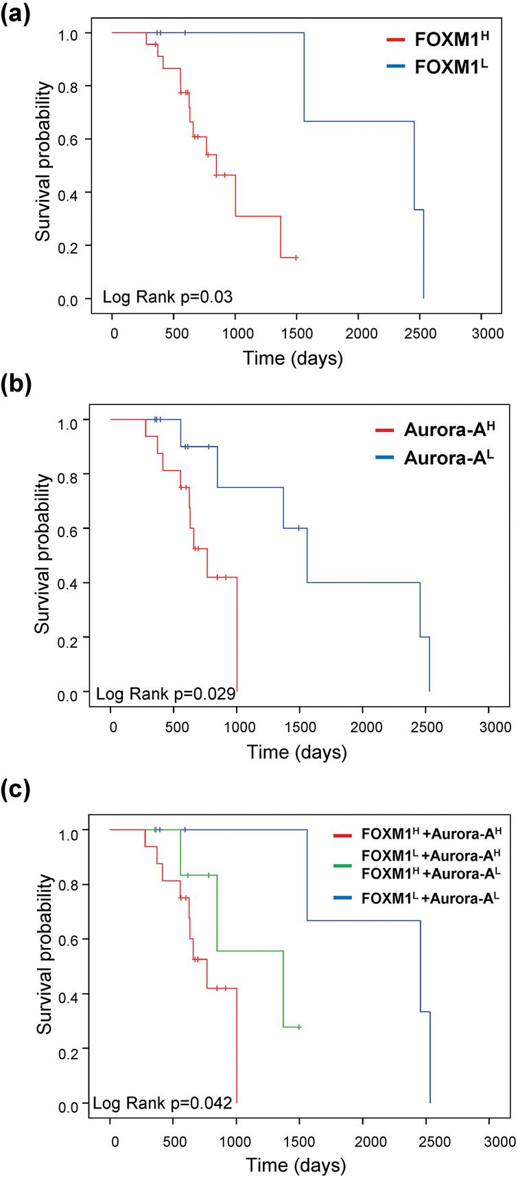 FOXM1 and Aurora-A expression predict the prognosis of sorafenib-treated patients in HCC. KaplanMeier curves of overall survival probability were estimated with different FOXM1 (a), Aurora-A (b), and FOXM1/Aurora-A (c) expression status in sorafenib-treated patients obtained from the TCGA dataset (n= 29).