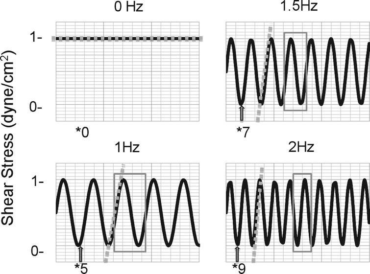 Sample waveforms at maximum amplitude of 1 dyne/cm2. Each cycle is shown within the boxed region. The length of each cycle decreases with increasing frequency. During non-pulsatile flow, a constant pressure is applied to the interface to maintain a user-defined shear, 1 dyne/cm2. To establish pulsatile flow pressure oscillates from 0 to the pressure required to establish 1 dyne/cm2. The grey arrows represent the low shear period of the oscillatory cycle, where we propose many adhesive interactions take place. The number below represents the amount of these low shear periods that occur during the same period. The dashed grey lines represent the slope of the linear region of each oscillation. The slope increases as the frequency increases.