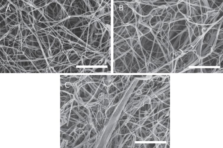 SEM images of a fibrin gel formed under SAOS and those formed under CSPS at different levels of shear stress. Fibrin gel network formed under (A) SAOS (σs= 0 Pa), (B) CSPS (σs= 0.1 Pa) and (C) CSPS (σs= 0.35 Pa) with the corresponding values of df being 1.99 (± 0.01), 2.03 (± 0.01) and 2.3 (± 0.05), respectively. The scale bar width is 5 μm.