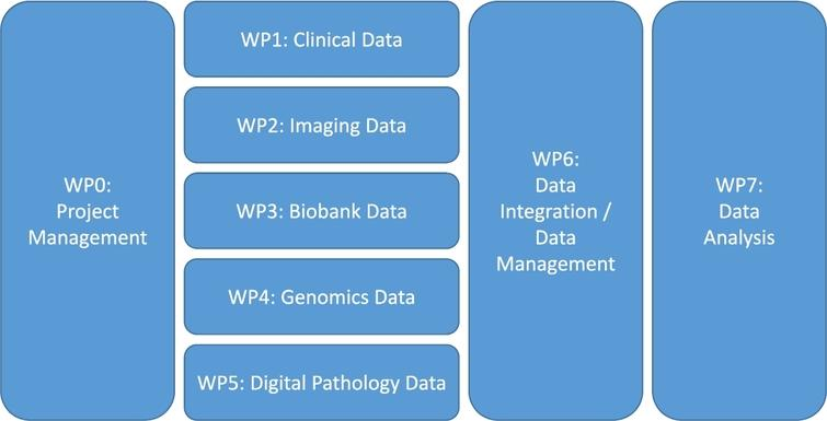 A proposed work package (WP) structure for a translational research project.
