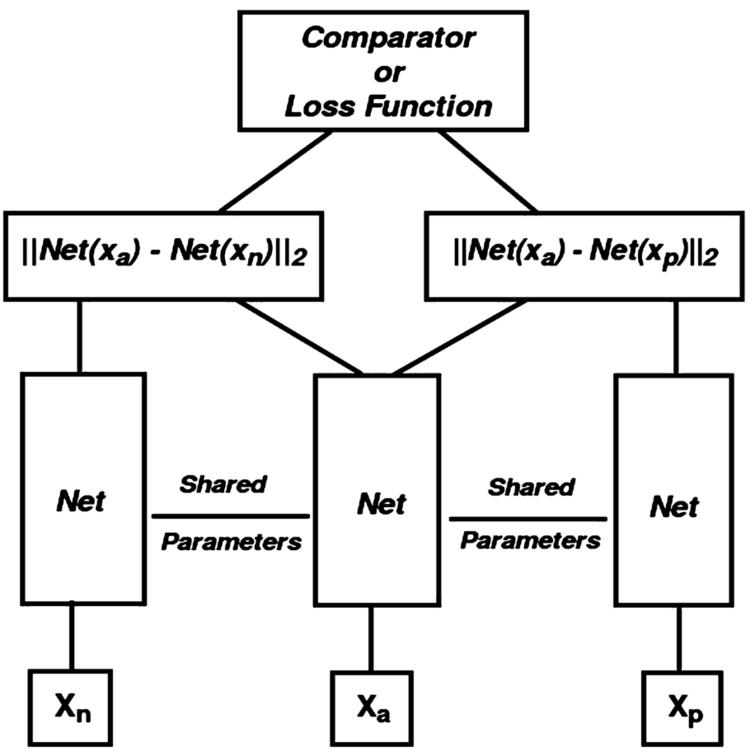 A schematic representation of triplet neural network architecture, which consists three feed forward neural networks of the same instance with shared parameters.