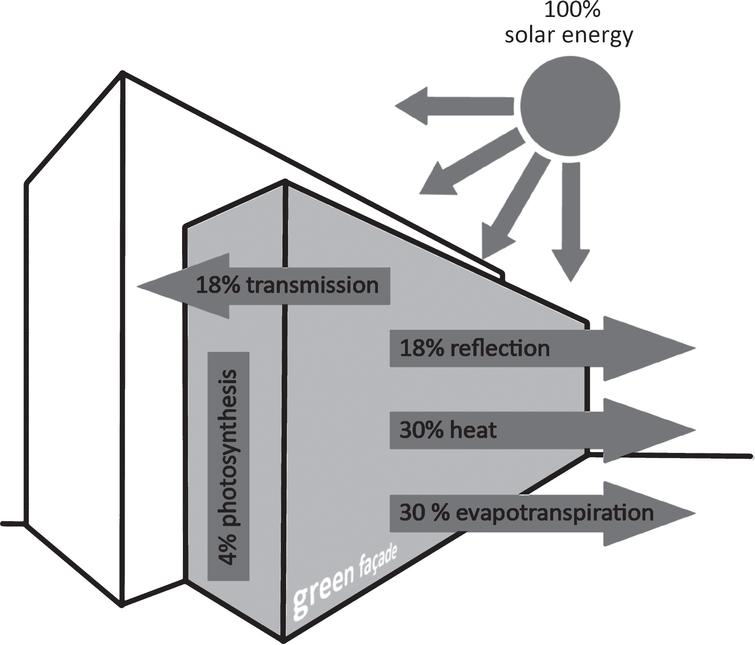 Schematic diagram of energy processes on green façades. Illustration: Michael J. Paar according to Per Krusche.