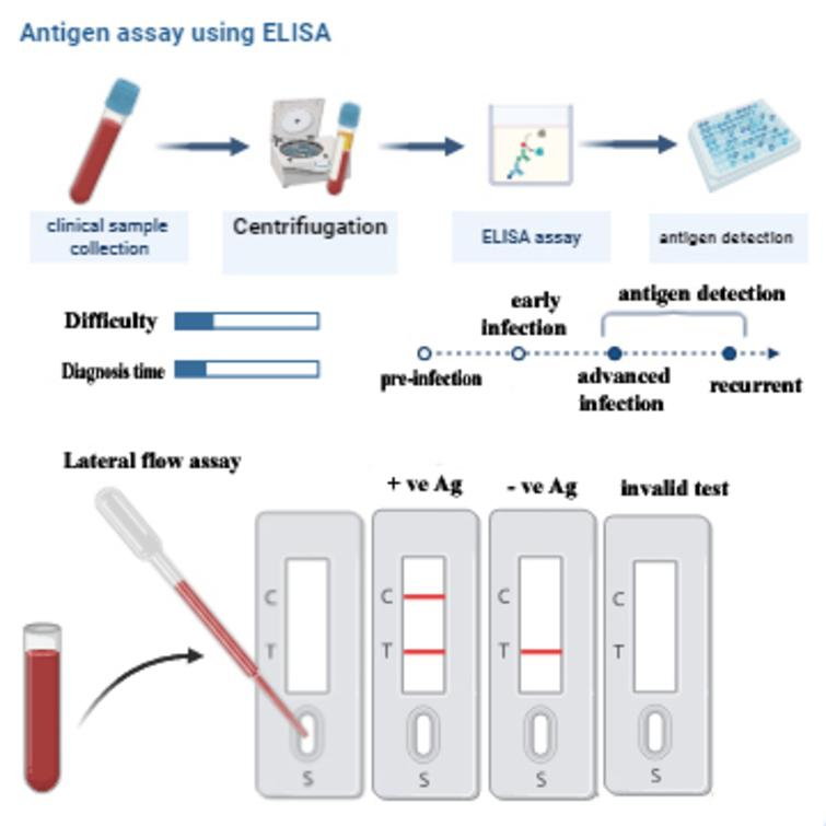 Immunodetection of SARS-CoV-2 based on specific monoclonal antibodies using ELISA or lateral flow assay.