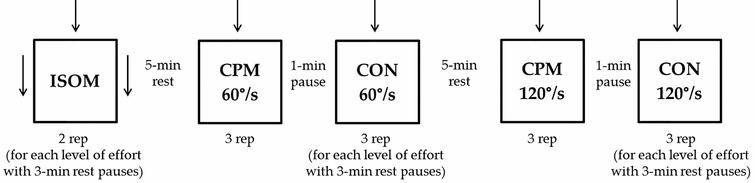 Schematic representation of the experimental protocol. Arrows represent doublet stimulation. ISOM: isometric contraction; CPM: continuous passive isokinetic motion; CON: isokinetic concentric contraction; rep: repetitions.