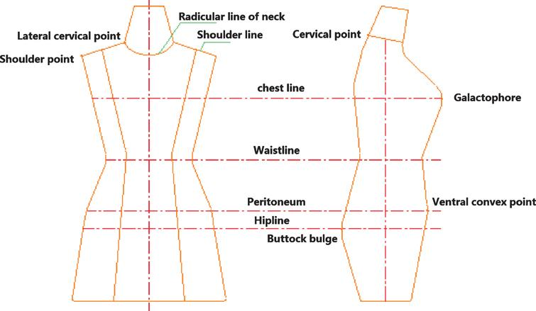Datum point and datum line map of human body surface.