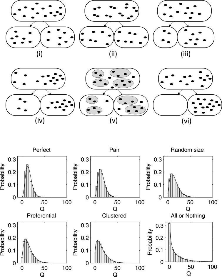 (Top) Different partitioning schemes. (i) Perfect (ii) Pair formation (iii) Random size (iv) Preferential (v) Clustered (vi) All or Nothing. Also shown (Bottom) are the non-functional protein distributions resulting from each of the partitioning schemes.