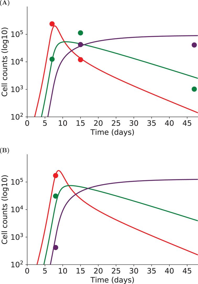 The dynamics of three subpopulations (early effector - red, late effector - green, memory - purple) are simulated with System(2) for two individuals. Experimental measurements are represented by dots, simulations of the model by straight lines. (A) Individual cell counts have been measured on days 7, 15 and 47pi. (B) Individual cell counts have been measured on day 8pi only. Although each individual is not characterized by enough experimental measurements to allow parameter estimation on single individuals, nonlinear mixed effects models provide individual fits by considering a population approach.