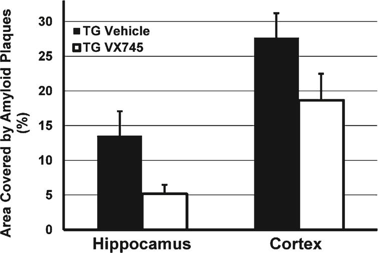 Effects of VX-745 on the area of amyloid plaque in the hippocampus and cortex of Tg2576 mice. Expressed as Mean (±SEM) percentage of total area by immunohistochemistry staining for Aβ. Mice treated with VX-745 (3 mg/kg) demonstrated a statistical trend toward decreased number of amyloid plaques in the hippocampus (p = 0.069, unpaired two-sided t-test), compared to vehicle treated transgenic mice. In addition, amyloid plaque load was numerically lower in the cortex of VX-745-treated lower (p = not significant).