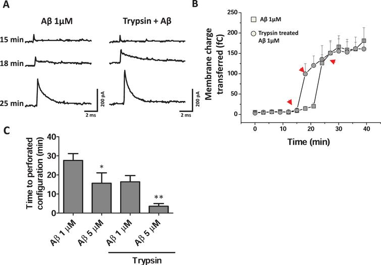 Trypsin treatment decreased the time to perforated configuration induced by Aβ. A) Representative capacitative currents (5mV) in the perforated configuration using Aβ (1 μM) in the pipette in HEK cells. B) Plot showing the charge transferred through the membrane of the cell in a time dependent manner, showing that Aβ perforates the membrane faster in trypsin pre-treated cells (0.00025%, 30min) than in control cells without any treatments. Arrow heads (red) indicate the times of the recordings shown in panel A. C) Graph showing the time needed by Aβ to acquire a perforation configuration. The trypsin pre-treated cells had a faster perforation time. *p<0.05, **p<0.01.