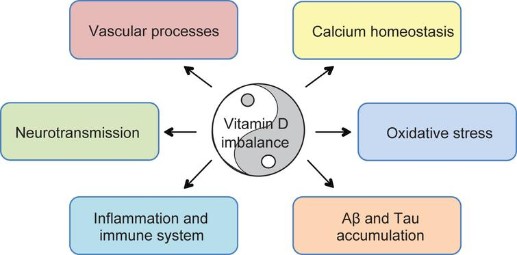 Proposed mechanisms of vitamin D-mediated multi-targeted effects in AD. Vitamin D imbalance is proposed to alter mechanisms implicated in aging and AD pathogenesis. Suggested protective effects of vitamin D supplementation concern regulation of vascular processes and oxidative stress, calcium homeostasis, neurotransmission, modulation of immune and inflammatory processes, and direct impact on amyloidogenesis, ultimately improving cognitive functions.