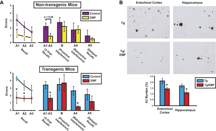 At 8 months into EMF treatment, cognitively-impaired AD mice (Tg) mice exhibited cognitive benefits and reduced brain Aβ deposition. A) Cognitive interference testing revealed Tg/EMF mice as vastly superior to Tg controls in 3-trial recall and retroactive interference performance. Even non-transgenic (NT) mice receiving EMF exposure showed better recall performance than NT controls, particularly early in recall testing. The final 2-day block of testing is shown from four days of testing. Upper graph: *p<0.025 versus control; Lower graph: *p<0.05 or higher level of significance versus control. B) Long-term EMF treatment significantly reduced total Aβ deposition in entorhinal cortex and hippocampus of Tg mice. Photomicrographic examples of typical Aβ immunostained-plaques from Tg and Tg/EMF mice are provided. *p<0.02 versus Tg control group. Scale bar=50 μm.