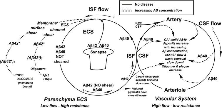 """Summary of the processes described in this paper shows two cycles that merge at the ISF/CSF interface. The solid lines represent the processes without disease. Dashed and dotted lines are those processes occurring with AD. The dashed line represents the """"non-wall"""" lower energy Aβ* aggregate formation process and the dotted line represents the results of the higher energy Aβ* """"wall"""" shear aggregate product (see text for definitions)."""