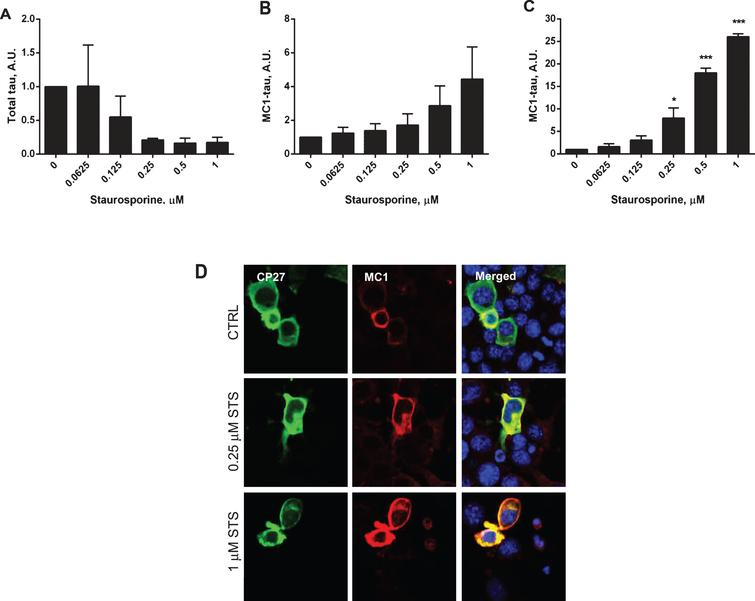 Dose-dependent increase in levels of conformationally-changed tau after treatment with staurosporine. Levels of total tau and conformationally-changed tau were measured in cell lysates of N2a cells transiently transfected with 2N4R tau cDNA and treated with 0.0625–1μM staurosporine. Relative amounts of total tau in DA9/CP27 ELISA (A), relative amounts of conformationally-changed tau levels measured by MC1/CP27 ELISA (B), levels of conformationally-changed tau corrected for total tau levels C). Linear regression with variable slope analyses were used to calculate relative amounts of total tau and conformationally-changed tau from standard curves derived from purified PHFs. Amounts of total tau and conformationally-changed tau are expressed as mean values of six individual data sets relative to non-treated controls set to unity. Statistical analyses for the relative amounts of conformationally-changed tau using one-way ANOVA with Dunnett's test confirmed significant differences between the values obtained for 0.25 (p<0.5), 0.5 (p<0.001), and 1 (p<0.001) μM staurosporine when compared to untreated controls. A.U., arbitrary units. D) Fluorescence micrographs of N2a cells immunostained for total tau with CP27 antibody, conformationally-changed tau with MC1 antibody, and merged with nuclear stained images.