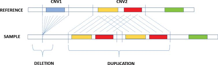 Description of deletion and duplication. Deletion occurs when in the sample genome there is aloss of aDNA segment in comparison with areference genome while duplication is caused by the repetition of DNA segments.