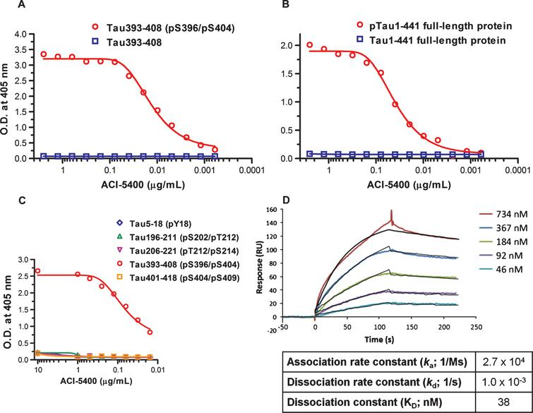 ACI-5400 reacts selectively with phosphorylated Tau protein and peptide in ELISA and Surface Plasmon Resonance. ELISA with increasing concentrations of ACI-5400 revealed the selectivity of the antibody for the phosphorylated form of the synthetic Tau393–408 (pS396/pS404) peptide (A) and for full-length pTau1-441 protein (B). No binding was observed to the corresponding non-phosphorylated peptide or protein Tau, or peptides corresponding to different Tau phospho sites (C). No binding was detected to the corresponding non-phosphorylated Tau peptides (not shown). Binding of antibody ACI-5400 at different concentrations as indicated, to the immobilized Tau393-408 (pS396/pS404) peptide (D). The colored curves are the SPR sensorgrams, whereas the black curves are fitted using a 1 : 1 Langmuir binding model.